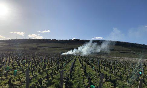 ブルゴーニュ-ブドウ畑-枝もやしの煙