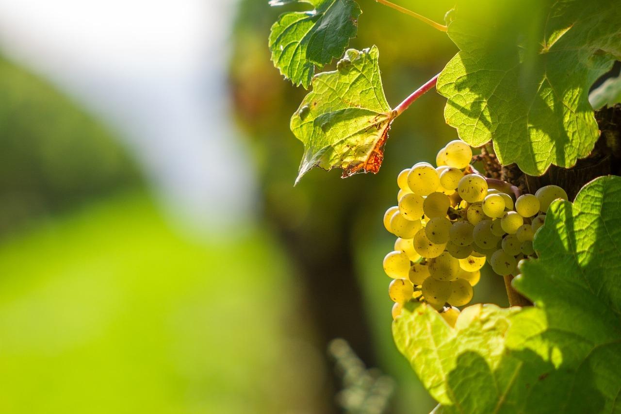 白ワイン-殺菌効果