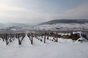 neige-雪のボーヌ-ぶどう畑