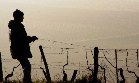 vines-冬のブルゴーニュ